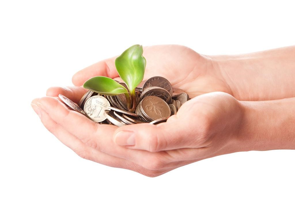 money palm - investor image