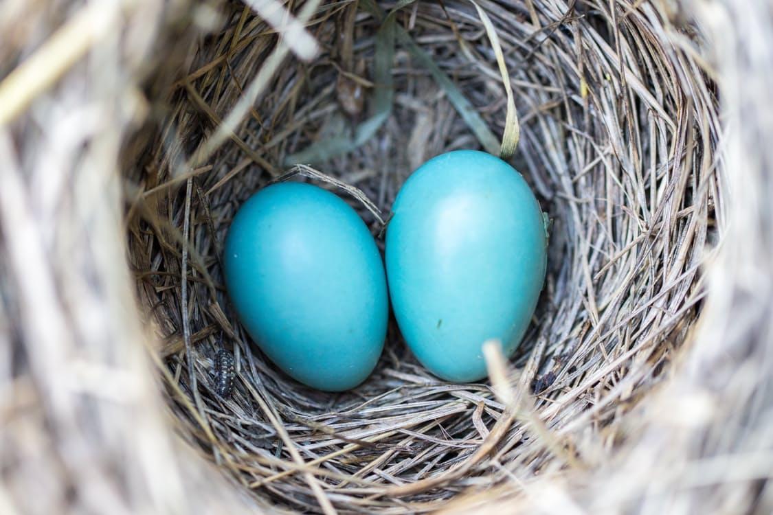 Financial Independence - nest egg image